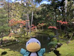 念願の京都苔寺に行ってきました