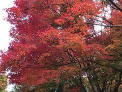 紅葉の三景園と広島エアポートホテルランチ