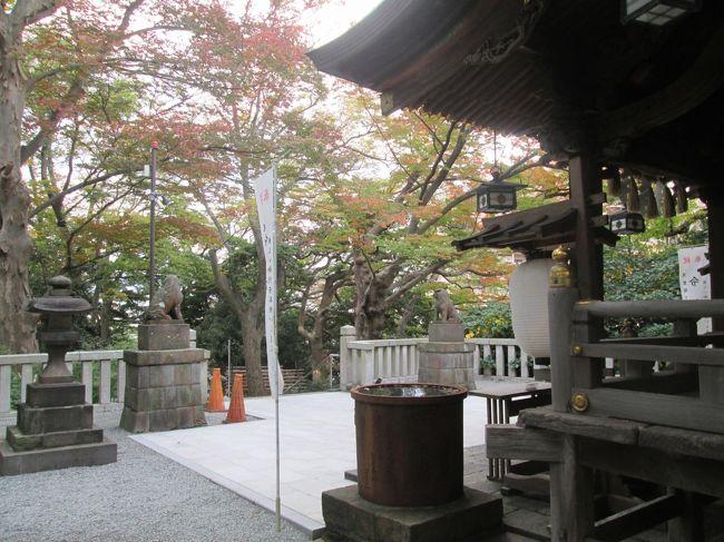 所用のため、年に何度か「白旗神社」近くへ通っています、4年前(2016年)は雨模様の夏の例大祭を紹介していました。<br /><br />11月第二週、藤沢近郊は今秋一番の寒い朝、秋色に変わり始めた白旗神社へ立ち寄ります、まだ朝の早い時間、境内には掃き清める神社の方と私だけ、そして、神社の境内は、七五三参りのお迎えの準備も整い、思いがけない秋色とのコラボレーションでした。<br />孫娘たちの七五三(今年が最後)は、鎌倉八幡宮へお参りしていましたが、今年は三密・混雑を回避するため、神社の変更、且つ、12月への日程順延を予定しています。<br /><br />コロナ禍のご時世、お参り後の食事会の可否を、幹事役として悩んでいます。<br /><br />表紙写真:白旗神社本殿横から参道へ 周りの木々も色づき始めていました。