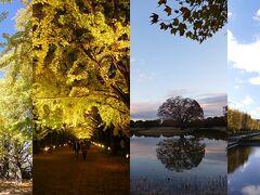 秋本番の昭和記念公園を訪ね、黄葉・紅葉の美しさに感動する!