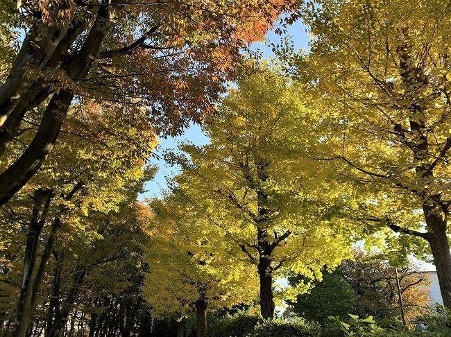 遠くに行かなくても、近くに素晴らしい紅葉がありました。<br />朝の目覚めのラジオ体操の後、携帯カメラで秋を撮りました。<br />雨の降らぬうちに、風の吹かぬうちに「秋の通り過ぎぬうちに」<br />秋は忙しいです。朝の光は、私の踊る気持ちをとらえてくれました。 <br /> 山は遠くになりました。 小さな秋見つけ