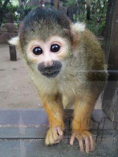 九州の旅2018-やさしさあふれる宮崎市フェニックス自然動物園