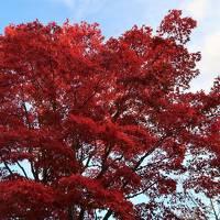 【北海道】支笏湖と小樽の美味しい温泉宿