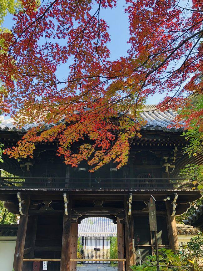 京都は出張で1時間だけ滞在などはあります。<br /><br />めっちゃ混んでて海外の方々をかき分けながら道を歩いた記憶が。<br /><br />GoToあるし、京の紅葉を楽しもうと来てみました。