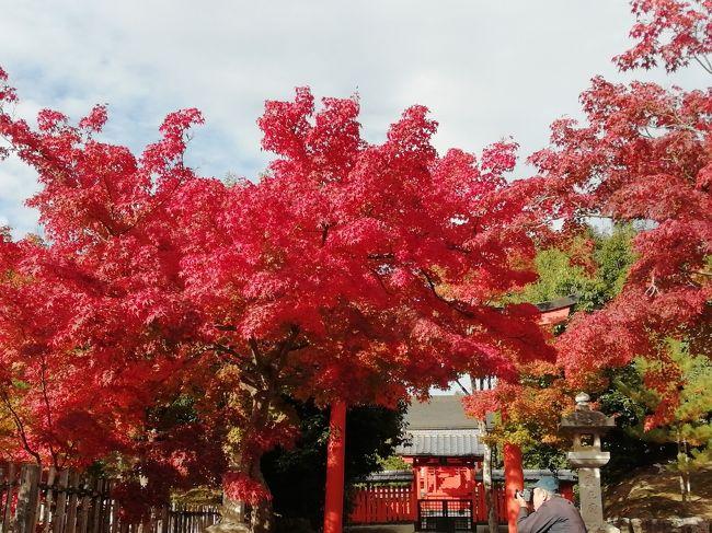今年3度目の京都<br />旅友から安いよ~と聞き一緒させてもらう事に。<br />でも私は出来るだけゆったりしたいので一日早く出かけることにしました。<br />こんなに紅葉にドンピシャになるとは...ラッキーでしたね。<br /><br />スタートは一人、最後は四人になりにぎやかにおしゃべりは夜中まで。<br />こういうのはコロナ以来久しぶり。<br />楽しかったです~