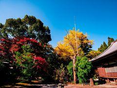 普現寺の紅葉 2020