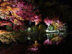 20201115-2 京都 京都府立植物園の紅葉ライトアップ