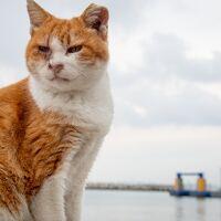 北九州ひとり旅02: 民宿ねェ 店もねェ あるのは自動販売機の馬島へ猫たちに会いにちょいと船旅