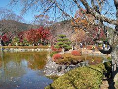 三年ぶりの桜山公園