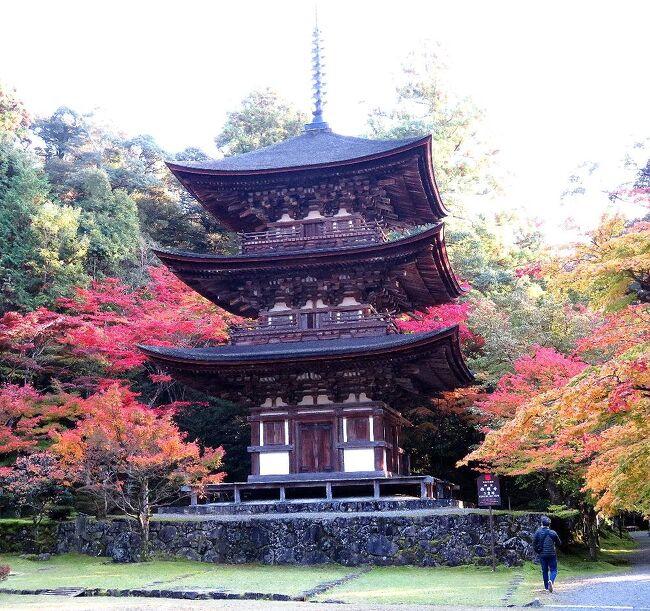 2020年の日本紅葉巡りドライブの最後は、滋賀&京都へ。紅葉シーズンでは、京都は2010年以来10年ぶり、滋賀は2002年以来18年ぶりだ。滋賀県内は、見どころが分散しているので、ほとんど車で移動。京都市内は、車で走り回るのはかなりハードルが高いので、滋賀に車を置いて電車で入ることに。八幡平に続いて友人を連れての3人旅だったが、京都の日曜日がものすごい混雑だった以外は、どこも比較的空いていて、久しぶりの滋賀・京都観光を堪能することが出来た。滋賀の第一部は、初日に東京を出発して、湖東三山のひとつ、西明寺を訪れた時のものです。(表紙写真は西明寺の国宝・三重塔)<br /><br />全旅程<br /><br />11/12  東京ー(中央道/名神)->湖東三山PA->西明寺ー>八日市駅前<br />                     (ホテルルートイン泊) <br /><br />11/13  八日市駅前ー>永源寺ー>金剛輪寺ー>八日市IC-(名神)ー><br />       竜王IC-> 長寿寺ー>常楽寺ー>瀬田 (ニューびわこホテル泊)<br /><br />11/14  瀬田ー>石山寺ー>日吉大社&旧竹林寺ー>奥比叡ドライブウェイ<br />   ->横川ー>延暦寺ー>比叡山ドライブウェイー>大津京駅<br />   (車を駅前の駐車場に置く)-(JR)ー>京都ー(地下鉄)ー>烏丸四条<br />                    (グリッズ京都四条河原町泊)<br /><br />11/15 烏丸四条―(バス)ー>高雄(神護寺から清滝へ)<br />   清滝ー(バス)ー>嵐山(宝厳院)-(嵐電/地下鉄)ー>蹴上ー><br />   永観堂ー> 蹴上ー(地下鉄)ー>京都市役所前 <br />                   (ホテルビスタプレミオ和邸泊)<br /><br />11/16 烏丸四条ー(地下鉄/JR)ー>東福寺駅ー>東福寺―(京阪)ー><br />   祇園四条->ホテルで荷物をピックアップして京都駅へ<br />   京都ー(JR)->大津京(車をピックアップ)ー>大津ICー<br />   (名神)->八日市ICー>教林坊ー>八日市IC-(名神)ー><br />   彦根ICー>彦根           (ホテルサンルート泊)<br /><br />11/17  彦根ー>(名神/中央道)->東京<br /><br />