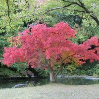 晩秋の大阪万博記念公園 自然文化園で「紅葉三昧のひと時」を過ごす。(2020)