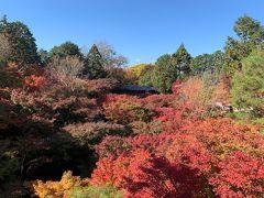 2020年11月 京都に紅葉を見に行く旅 1日目