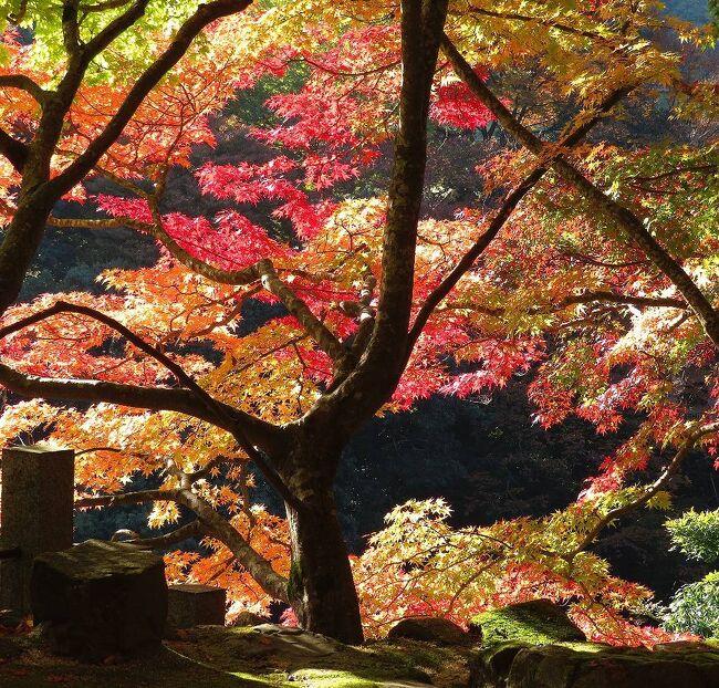 団塊夫婦の2020年日本紅葉巡りドライブー(滋賀2)18年ぶりの永源寺へ
