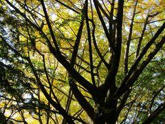 獅子舞谷の黄葉紅葉と紅葉具合-2020年秋