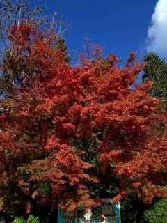 菩提寺の両子寺に参拝し境内を染める紅葉を見てきました(^-^*)