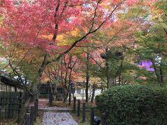 ★凄い★京都の紅葉・もみじの永観堂~~南禅寺はこの次に・・・