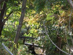 清泉小の池-2020年秋