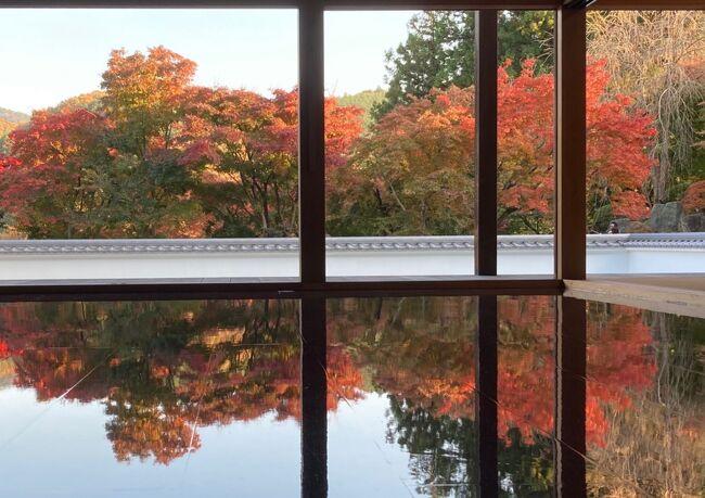 床紅葉の綺麗な場所が、関東にあるらしい。<br />某旅行社から届くパンフレットを見ても、11月を中心に、そこへ行くツアーかいっぱい。<br /><br />よ~し、自分で、平日の天気の良さそうなところで行ってみよう!<br />先日、夏に、日光へ行った時、足尾から日光へバスが通っているのも知ったし、日光から東京へ直行で行くバスもあるようだ。<br /><br />バスは、快適楽ちんなので、バスを使えるところはバスに乗り・・と、いろいろ予定を考え、一日目、床紅葉の綺麗な、宝徳寺のある桐生(初めて行く街)を楽しんで、二日目、やはり紅葉が綺麗だろう、わたらせ渓谷へ通り、ぐるりと日光から帰ってくるプランをたて、一泊二日、プチお出かけしてきました。