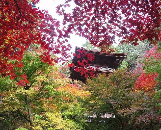 団塊夫婦の2020年日本紅葉巡りドライブー(滋賀3) 湖東三山・金剛輪寺