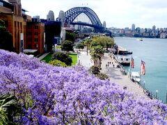 春のシドニーで旬の花見 桜とジャカランダ (Japanese cherry blossom & Jacaranda in Sydney)
