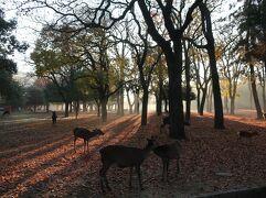 デパートついでに奈良公園🐮