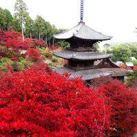 団塊夫婦の2020年日本紅葉巡りドライブー(滋賀4) 湖南三山・長寿寺&常楽寺