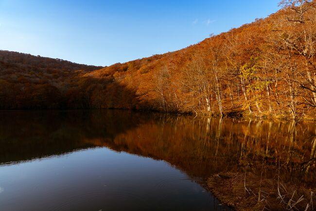 一年ぶりの旅行、十和田・奥入瀬の紅葉の旅行記です。<br />まずはプロローグの1日目。移動がメインで写真は少ないですが十和田湖までの様子をお伝えします。<br /><br />昨年は秋田の紅葉と温泉を体験し、今年も東北のどこかでと思っていたのですが、この状況でなかなか計画できませんでした。その後少し落ち着き Go To キャンペーンも利用できることで急遽計画したのが奥入瀬への旅行です。(11月になってまたたいへんな状況ですが)さらに十和田湖でも1泊することにし、奥入瀬での2泊と合わせ4日間、同じような写真の続く長大な旅行記ですが、1日ごとに区切ってお伝えします。