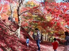 宍粟市の原不動滝と最上山公園へ紅葉狩りに出かけて来ました