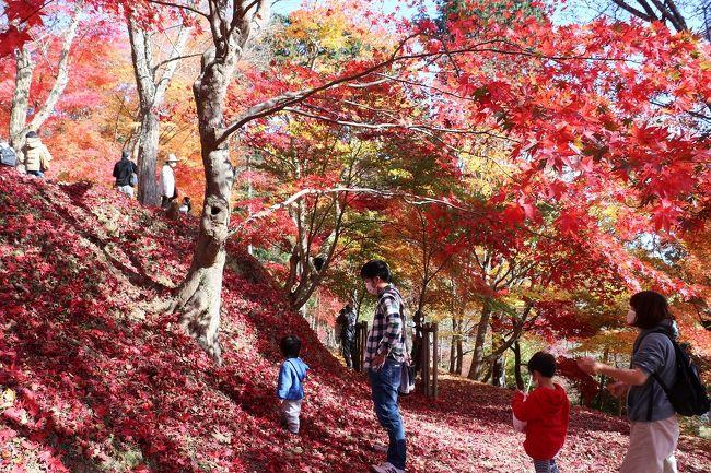 今年も毎年出かけている宍粟市の原不動滝と最上山公園のもみじ山に紅葉を楽しみに出かけて来ました。<br />今年は暖かいので紅葉も遅れているのかなと思ったのですが、原不動滝ではすでに枯れ葉(落葉)になっていました。<br />いっぽう、最上山公園のもみじ山はちょうど見頃でとてもきれいでした。<br />