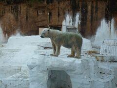コロナ自粛で癒しを求めて天王寺動物園に行ってみた