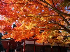 団塊夫婦の2020年日本紅葉巡りドライブー(滋賀6)奥比叡ドライブウェイを走り延暦寺へ