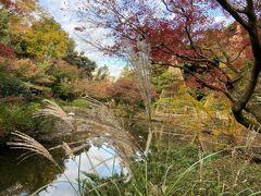 東京・庭園の紅葉2020~甘泉園庭園と水稲荷神社~