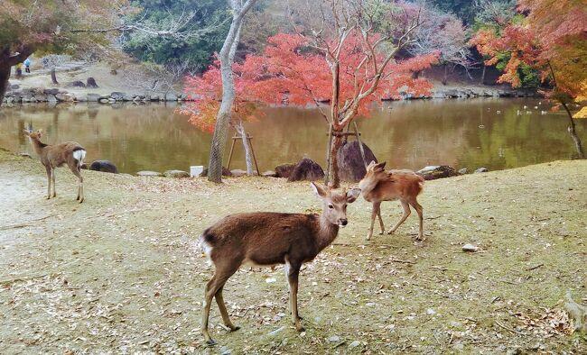 約三十年ぶりに奈良を訪れることにした。前回は真夏で暑かったことしか覚えていない。<br />今回は紅葉の季節である。近鉄奈良駅の近くの宿にニ泊し、歩いて行ける範囲をブラブラしてみることにした。訪れた主なスポットは、興福寺、猿沢池、春日大社、新薬師寺。最後に清酒「春鹿」の蔵元で利き酒をした。<br />(2020.11.22作成開始)