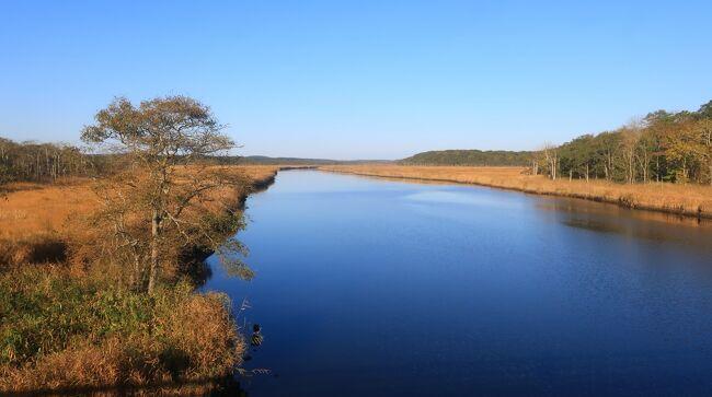 ヤウシュベツ川の河口に沿って湿原が広がっていました。<br />10月、湿原が茶色なのは草が紅葉してるのでしょうか。