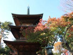 豪徳寺、世田谷公園など紅葉巡り 2020年11月