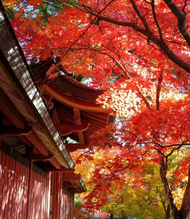 2020年の日本紅葉巡りドライブの最後は、滋賀&京都へ。紅葉シーズンでは、京都は2010年以来10年ぶり、滋賀は2002年以来18年ぶりだ。滋賀県内はほとんど車で移動したが、京都市内は、車で走り回るのはかなりハードルが高いので、滋賀に車を置いて電車で入ることに。京都の日曜日がものすごい混雑だった以外は、どこも比較的空いていて、久しぶりの滋賀・京都観光を堪能することが出来た。<br />京都第一部は、京都の紅葉巡りの初日に、朝一番で高雄の神護寺を訪れ、その後東海自然歩道を清滝まで歩いた時の旅行記です。(表紙写真は、神護寺の紅葉)<br /><br />全旅程<br /><br />11/12 東京ー(中央道/名神)->湖東三山PA->西明寺ー>八日市駅前<br />                     (ホテルルートイン泊) <br /><br />11/13 八日市駅前ー>永源寺ー>金剛輪寺ー>八日市IC-(名神)ー><br /><br />11/14 瀬田ー>石山寺ー>日吉大社&旧竹林寺ー>奥比叡ドライブウェイ<br />   ->横川ー>延暦寺ー>比叡山ドライブウェイー>大津京駅<br />   (車を駅前の駐車場に置く)-(JR)ー>京都ー(地下鉄)ー>烏丸四条<br />                    (グリッズ京都四条河原町泊)<br /><br />11/15 烏丸四条―(バス)ー>高雄(神護寺から清滝へ)<br />   清滝ー(バス)ー>嵐山(宝厳院)-(嵐電/地下鉄)ー>蹴上ー><br />   永観堂ー> 蹴上ー(地下鉄)ー>京都市役所前 <br />                   (ホテルビスタプレミオ和邸泊)<br /><br />11/16 烏丸四条ー(地下鉄/JR)ー>東福寺駅ー>東福寺―(京阪)ー><br />   祇園四条->ホテルで荷物をピックアップして京都駅へ<br />   京都ー(JR)->大津京(車をピックアップ)ー>大津ICー<br />   (名神)->八日市ICー>教林坊ー>八日市IC-(名神)ー><br />   彦根ICー>彦根           (ホテルサンルート泊)<br /><br />11/17 彦根ー>(名神/中央道)->東京