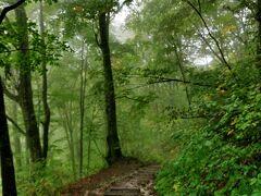 JALどこかにマイル 15回目は青森へ 2日目  雨の白神山地をトレッキング