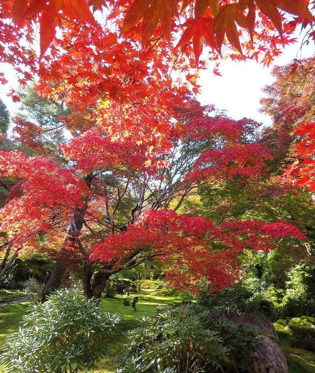 団塊夫婦の2020年日本紅葉巡りドライブー(京都2)激混みの嵐山・拝観は宝厳院のみ