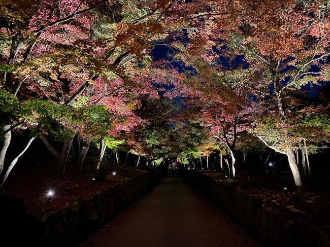 我慢の3連休と言われた中、賛否両論の京都(&amp;滋賀)に行ってまいりました。<br /><br />と言っても、報道されていた清水寺や渡月橋付近にはほとんど行っておりません。笑<br />むしろ外国人観光客がいない分、普段より快適に過ごすことが出来ました!<br /><br />1日目はお昼過ぎから半日の観光でしたが、祇園周辺・平安神宮、そして電車で宇治へ行って参りました。<br /><br />まだまだ紅葉シーズン。密を避けつつ旅行したい方の参考になれば幸いです。