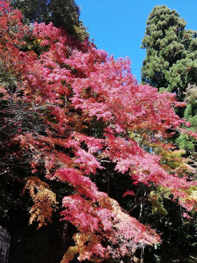 京都在住のお友達ご夫婦に、高雄へ紅葉を見に連れて行って貰いました。<br /><br />一人歩きではなかなか行けない場所なので、とても有難かったです(^^<br /><br />少し時間が経ってしまいましたが、備忘録として残させていただきます~<br /><br />今年の紅葉見学は最初で最後かなーーー