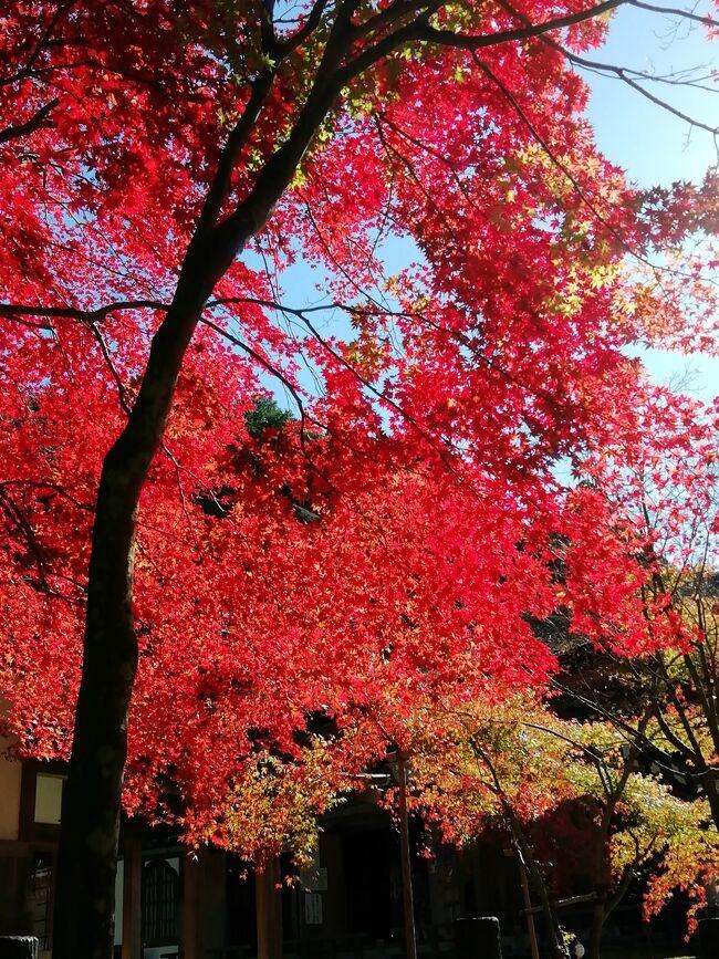二日目<br />晩秋の湖東三山巡りました。<br />紅葉は終わりかけていましたが穏やかな天気に恵まれて人出は増えているように思いました。<br />でも、皆コロナ地策はしっかりされていましたよ。<br />どのお寺さんも本堂まではかなり登りますが眺望の良さはそのご褒美ですね<br /><br />百済寺 金剛輪寺 西明寺の順に歴史は古く1200年から1400年の歴史がある古刹です。<br />三山ともお寺さんには素晴らしい庭園があり見応えあります。<br /><br />特に百済寺さんは数々の映画やドラマのロケ地に使われています。<br /><br />