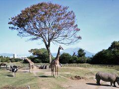 コアラ舎が印象的 平川動物公園