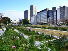 情緒纏綿 大阪市中之島④中之島バラ園、その他(エピローグ)