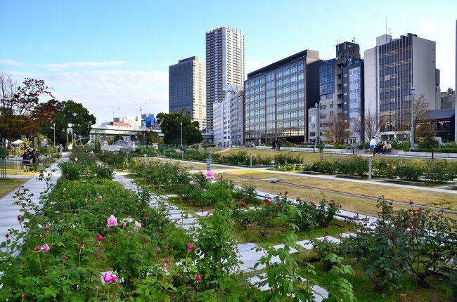 中之島バラ園は大阪市が管理する最大のバラ園です。1891(明治24)年、大阪市で初めての公園としてオープンし、1978年に芝生だった一画をバラ園として一般開放するという計画が立ち上がり、バラ栽培の第一人者 津志本貞氏が欧米のバラ園を参考にして1980年に本格的なバラ園が完成しました。 中之島公園の東端に東西500mに渡って造園されており、落ち着いた雰囲気があり、都会の真ん中にあることを感じさせません。<br />「バラの庭」「バラ園橋」「バラの広場」「バラの小みち」などのエリアでは5月になると89種類、約4000株ものバラが満開になります。また、10月中旬から11月上旬にかけては約310種類、約3700株のバラが咲き誇ります。バラは発表された年代別に植えられており、歩道には年号の入った案内板も設置されています。