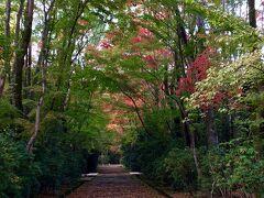 秋の奈良・京都 眼福口福 ゆったり時間を味合う旅