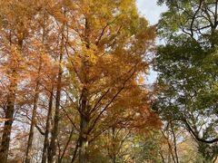 東京・中野の蚕由来の公園の紅葉2020~蚕糸の森公園~