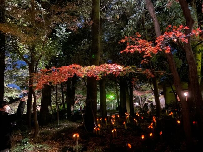 紅葉がライトアップされている東京・大田黒公園に行ってきました。<br />暗闇に真っ赤な葉っぱが浮かび上がる姿は貴重でした。