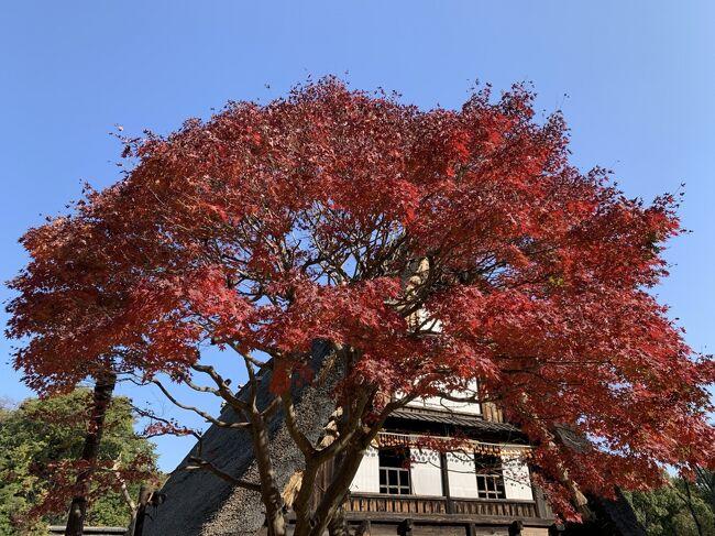 日本民家園に行ってきました。<br />代表的な古民家を移築するなどして、消えつつある古民家を後世に残すために造られた野外の施設です。<br />民家内も当時の様子を再現しています。<br /><br />25の古民家などから、時代の変化や土地の特徴などがうかがえます。<br />園内は広く、晩秋を感じながら散策できました。<br />