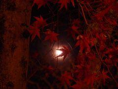 Gotoで行く三度目の京都【1】永観堂の紅葉ライトアップは落葉多しでした。