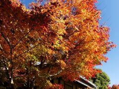 「旧秋元別邸」の紅葉_2020(2)_紅葉進んでいるが、一部は散り始め(群馬県・館林市)